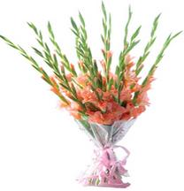 A Hand tide bunch of 15 fresh gladioli
